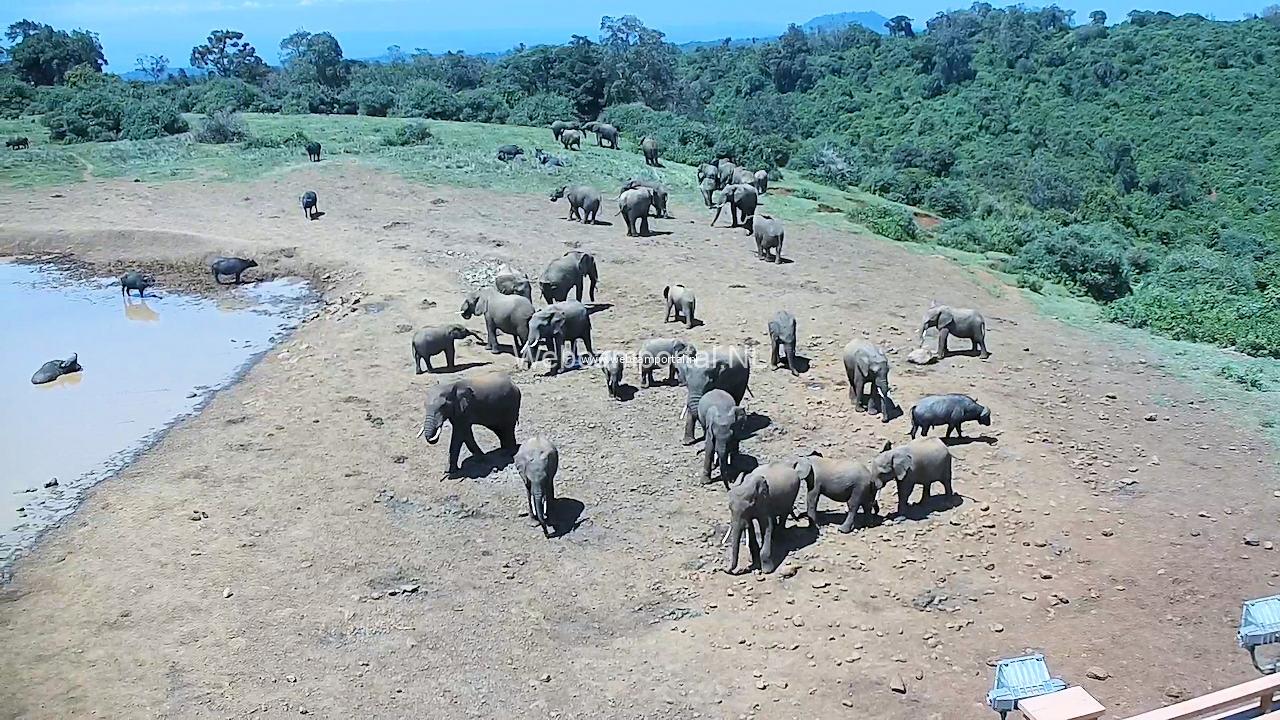 Webcams Afrika