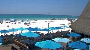 Webcam Sharky