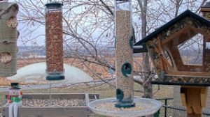 Webcam Birdfeeder Alberta