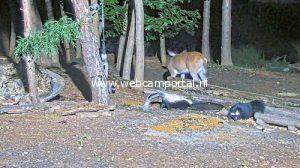 Webcam Woodland